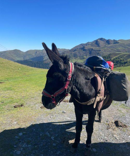 Yoga et ânes - Pyrénées - Septembre 2021 - Un âne durant la randonnée